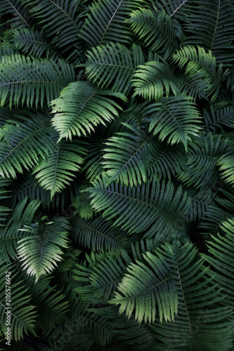 leafs fern rain drops tropical top view nature background dreen fine art fresh sweet cool new - 205576642
