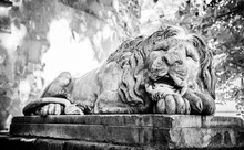 Sleeping Lion In Lviv