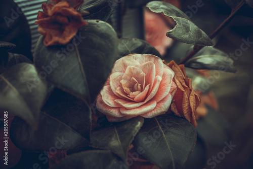 Fototapeta English Roses obraz
