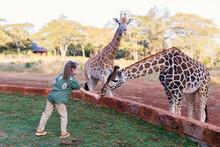 Cute Little Girl Feeding Giraf...