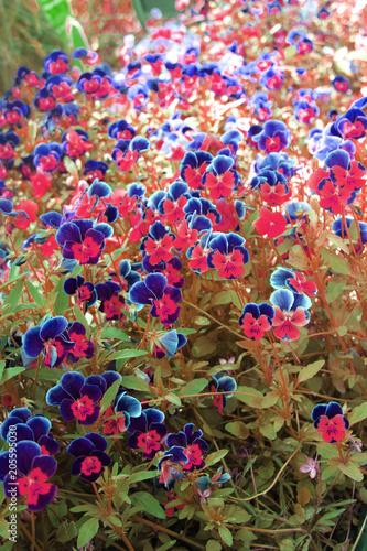 Poster Kaki nice spring flowers