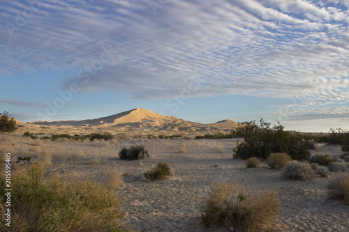 Poster Cappuccino Desert Sand Dunes and Cactus Landscape