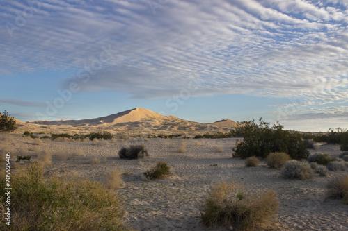 Foto op Canvas Cappuccino Desert Sand Dunes and Cactus Landscape