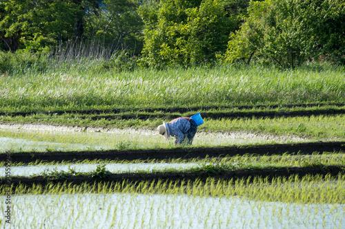 Foto  農業