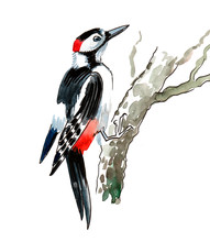 Watercolor Illustration Of A Woodpecker Bird