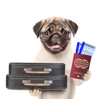 Funny Puppy Holds Suitcases, Tickets And Passport Ready For A Vacation. Isolated On White Background