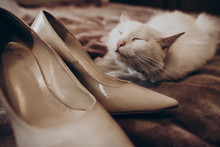 Cute White Cat With Funny Emotion And Beige Stylish Shoes On Bed, Bride's Morning. Wedding Preparation In Home. Space For Text. Family Concept. Funny Kitten