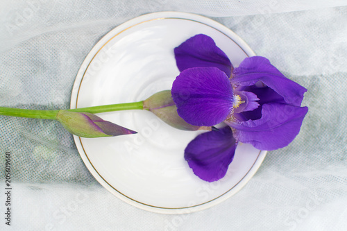 a flower of iris in a white plate on a white cloth. horizontal romantic background.