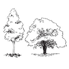 Set Of Hand Drawn Architect Trees, Sketch Tree Silhouette