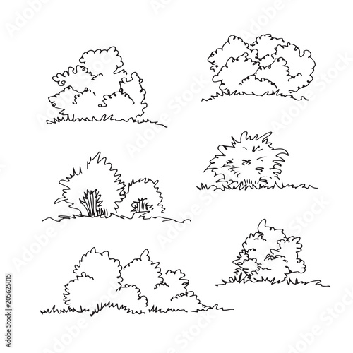 Leinwand Poster Set of hand drawn architect bushes, dendrology sketch collection