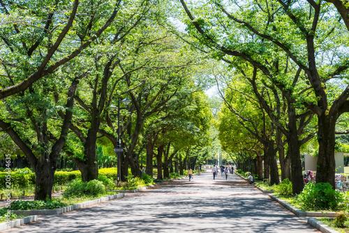 府中の森公園の並木道