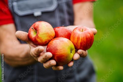 Mans ręce ze świeżo zebranych jabłek. Koncepcja rolnictwa i ogrodnictwa.