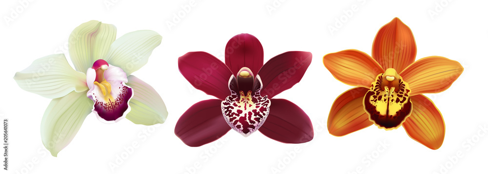 Fototapety, obrazy: Tropical Orchid Cymbidium flowers.