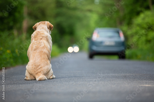 obraz PCV Abandoned dog on the road