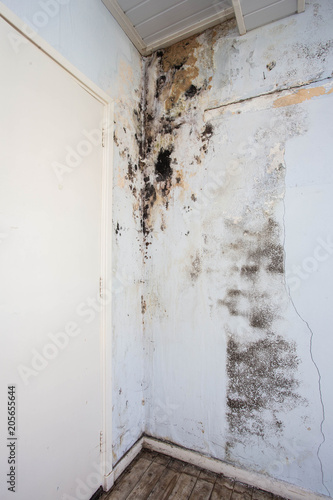 Water damage causing mold growth on the interior walls of a property Fototapet