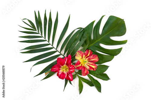 Tropical leaves palm tree and monstera with red yellow flowers on a tropical leaves palm tree and monstera with red yellow flowers on a white background top mightylinksfo