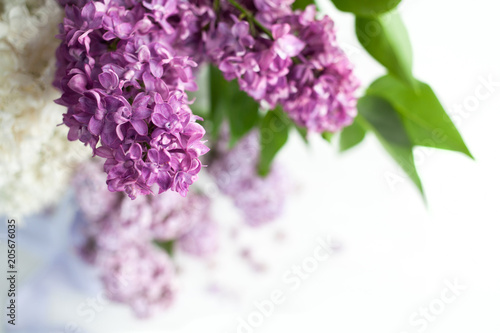 Foto op Canvas Lilac Branch of a lilac isolated on white background