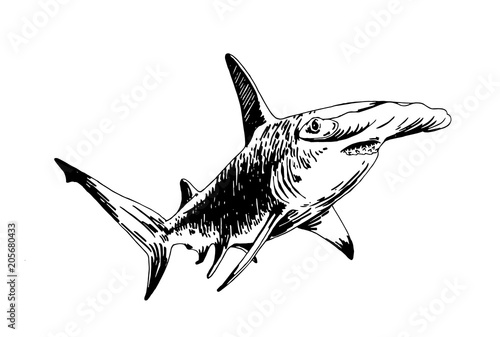 Obraz Graphical hammerhead shark isolated on white background , vector illustration - fototapety do salonu