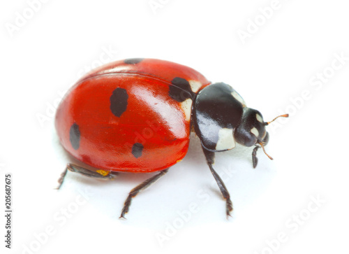 Photo  Ladybug isolated on white background