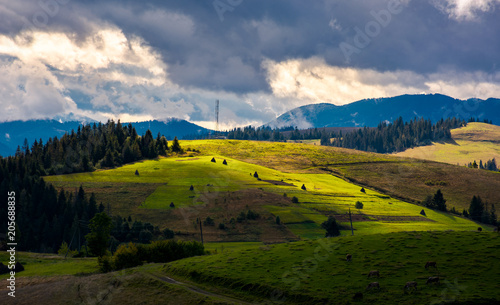 Fototapety, obrazy: mountainous rural area on a cloudy day. gorgeous light on rolling hills with haystacks and spruce forest. mountain ridge in the far distance.