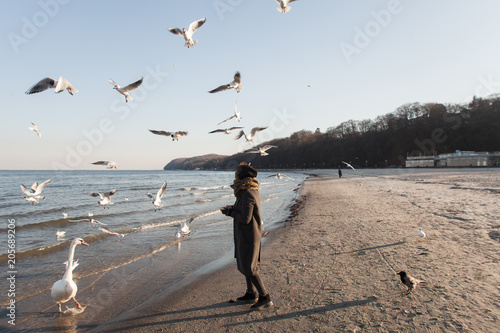 Birds on the seafront, swans, seagulls, the girl feeds birds