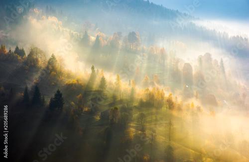 mgla-nad-lasem-w-swietle-poranka-piekna-przyroda-drzewa-z-zoltymi-liscmi-na-wzgorzach-jesienia-niesamowita-atmosfera-w-karpatach
