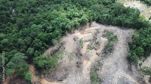 Poster Kaki Deforestation. Borneo rainforest destroyed to make way for oil palm plantations