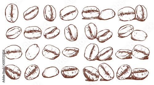 Fotografija Coffee beans, sketch, vector drawing set, Ingredient, Doodle design