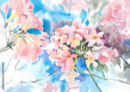 Delikatne różowe, słoneczne kwiaty. Firletka. Tło akwarela.
