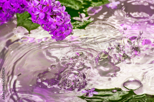 Garden Poster Lilac flowers under the drops of the rain
