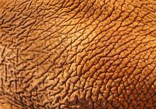 Skin Of Elephant.