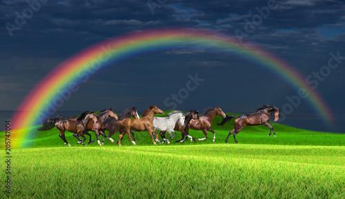 Obraz na plátně  Herd of horses running along a green meadow under a rainbow against a stormy sky