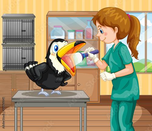 Papiers peints Jeunes enfants A Vet Doctor Checking a Hornbill