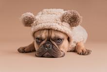 French Bulldog - Angry Bear