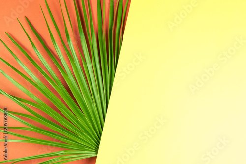 Valokuvatapetti Tropical palm leaf with colorful background.