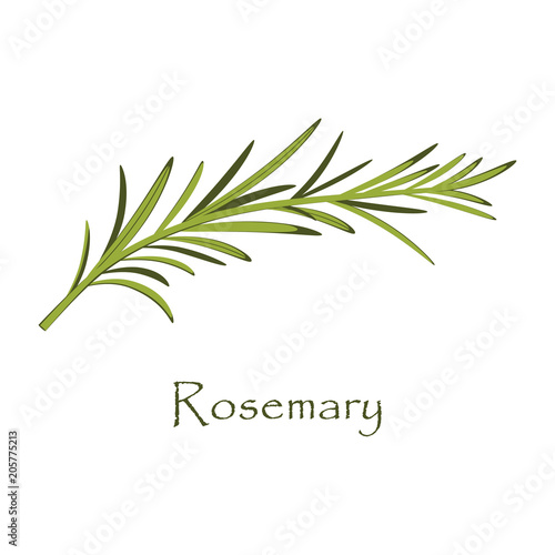 branch of rosemary on white Slika na platnu