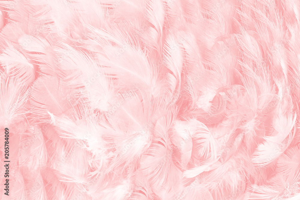 Fototapety, obrazy: soft pink vintage color trends chicken feather texture background
