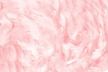 Soft Pink Vintage Color Trends...