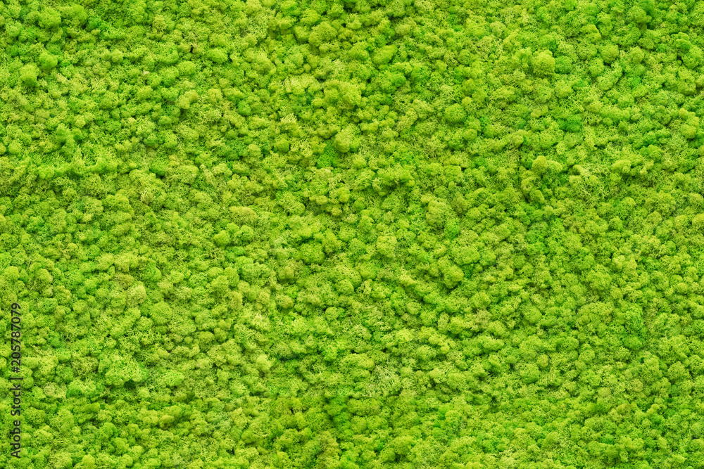 Fototapety, obrazy: seamless close up green moss texture
