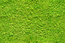 Seamless Close Up Green Moss T...