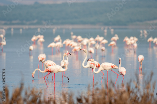 Flamingos in lagoon Fuente de Piedra Canvas-taulu