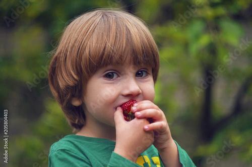 The child eats a ripe sweet strawberry Fototapeta