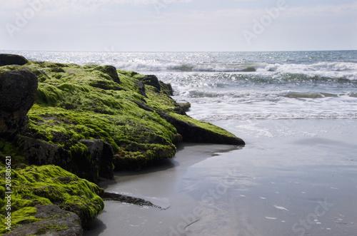 Fotografie, Obraz  Moss Covered Rocks on Pawleys Island South Carolina Beach