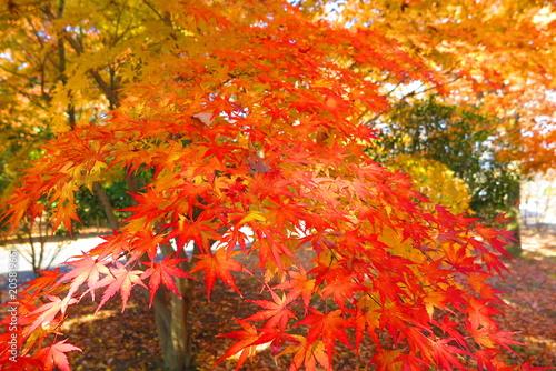 Foto op Canvas Baksteen 秋の公園の風景14
