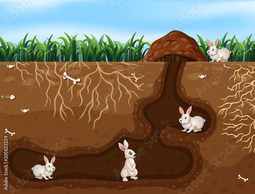 Papiers peints Jeunes enfants Rabbit Family Living in the Hole