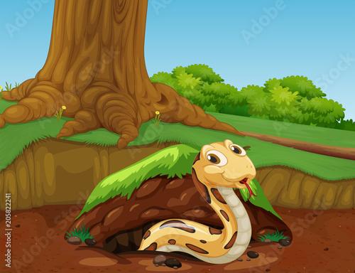 Papiers peints Jeunes enfants A Vector of Snake in the Nature