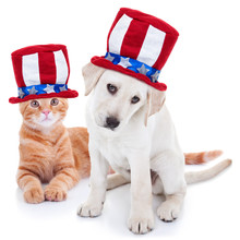 Patriotic American Pet Dog And...