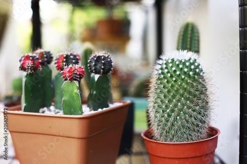 Tuinposter Cactus cactus and home garden