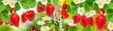 fresh berry summer garden