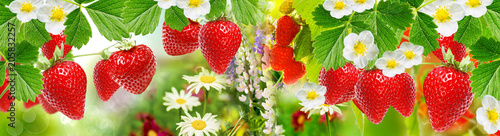 fresh berry summer garden